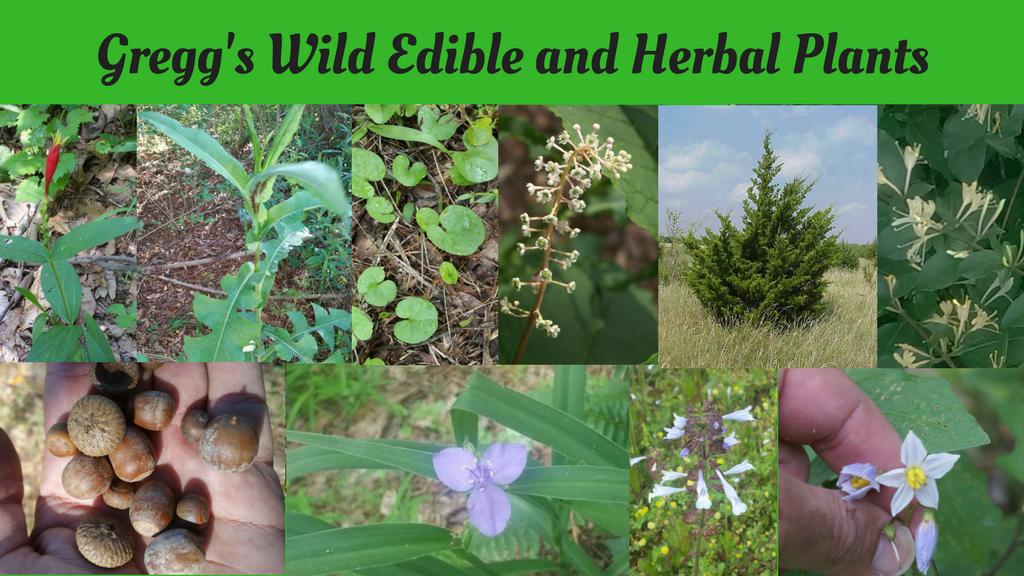 Wild Edible and Herbal Plants project video thumbnail