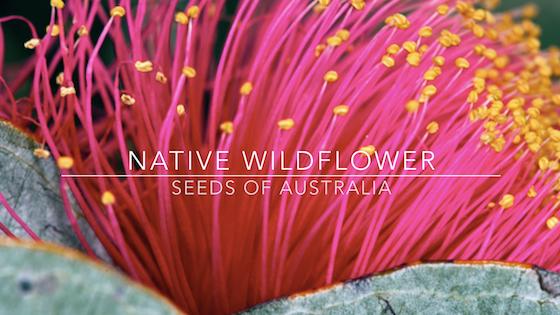 Bringing Australian wildflowers to the world