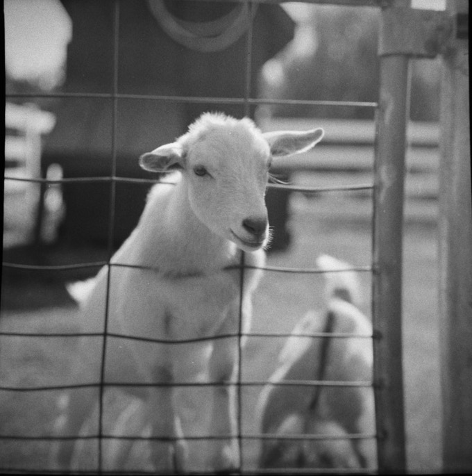 120 (6x6) medium format black and white film