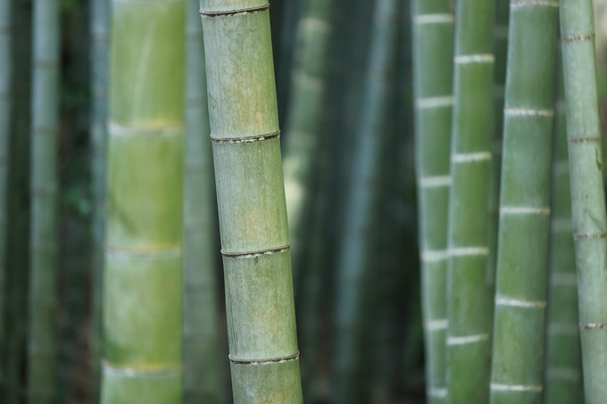 Bamboo: Highly sustainable, good for the environment, food-grade quality.