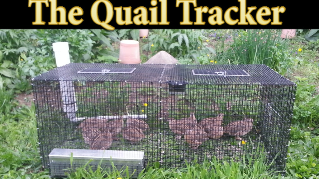 Quail tracker project video thumbnail