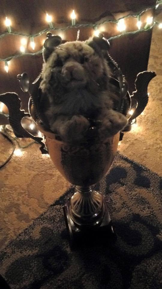 Prickles hides in the NWM House Cup, after winning the title of Ball Monarch.