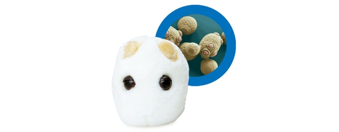 Includes the super cute Yeasty plush from our partners at GiantMicrobes.