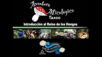 Festival Micológico Taxco