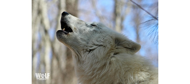 Atka is pleased to contribute poop to help her canine cousins.