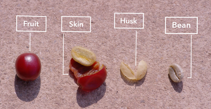 Coffee is the seed of a fruit; husk is a layer of shell (parchment) around that seed.