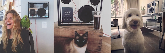 Transparent speaker is loved by birds, cats and dogs alike. Instagram from @grandpastore @pas_kaline @mt.xls