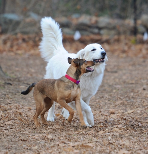 Blue and his BFF (Best Foster Friend), Bubba
