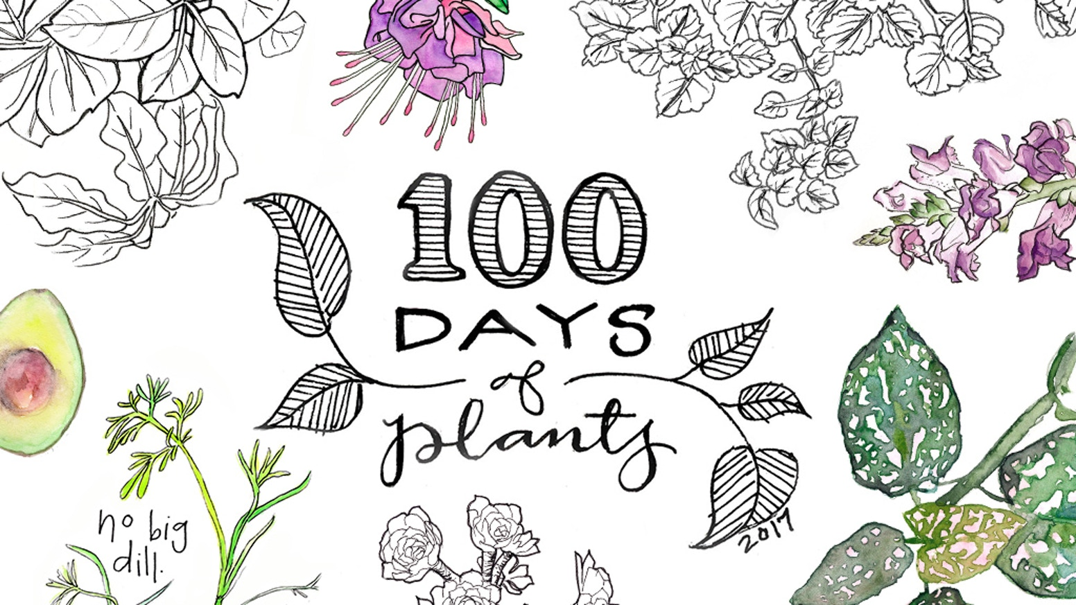 A book containing illustrations of plants created during my #100DaysofPlants project.