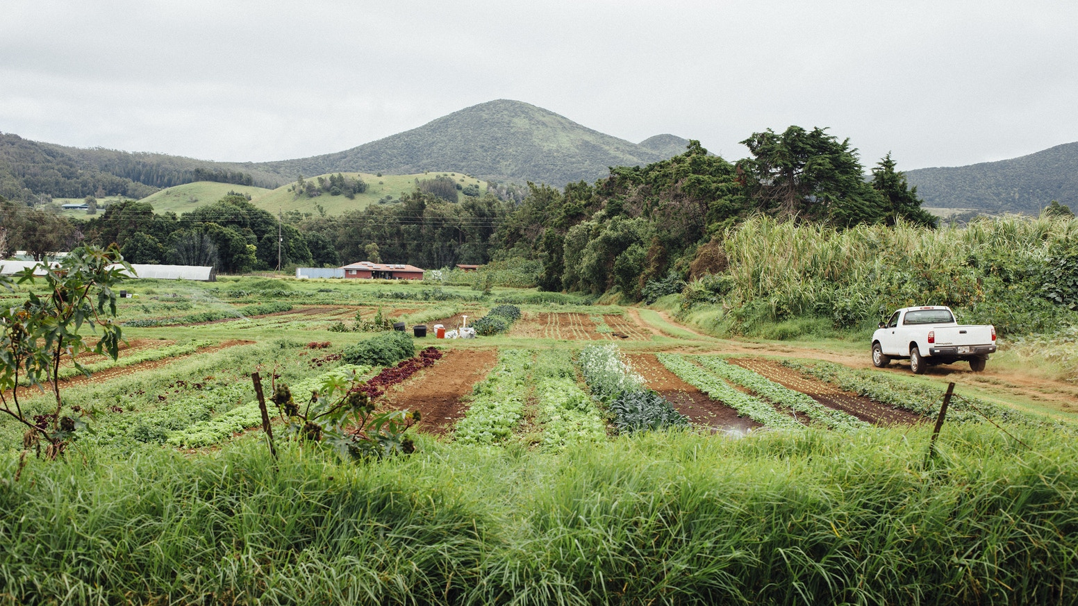 Through vivid photos and essays, our book showcases an inspiring group of men and women who are revitalizing foodways in Hawaii.