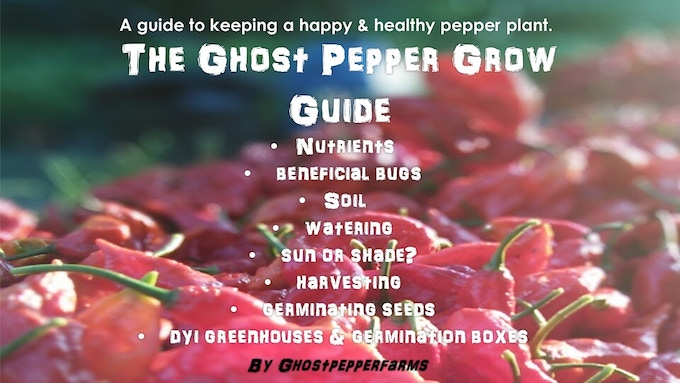 The Ghost Pepper Grow Guide