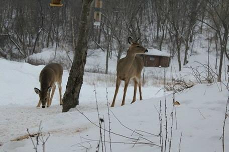 Deer grazing at Christ In The Wilderness Retreat in winter