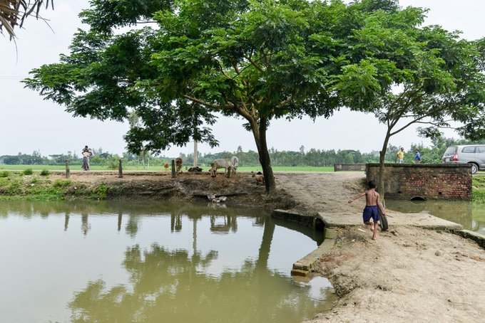 A Local Pond for Fishing in West Bengal
