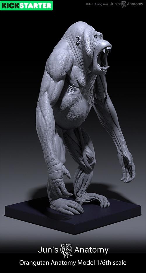 Jun's Anatomy: Human & Great Apes anatomy models by Jun