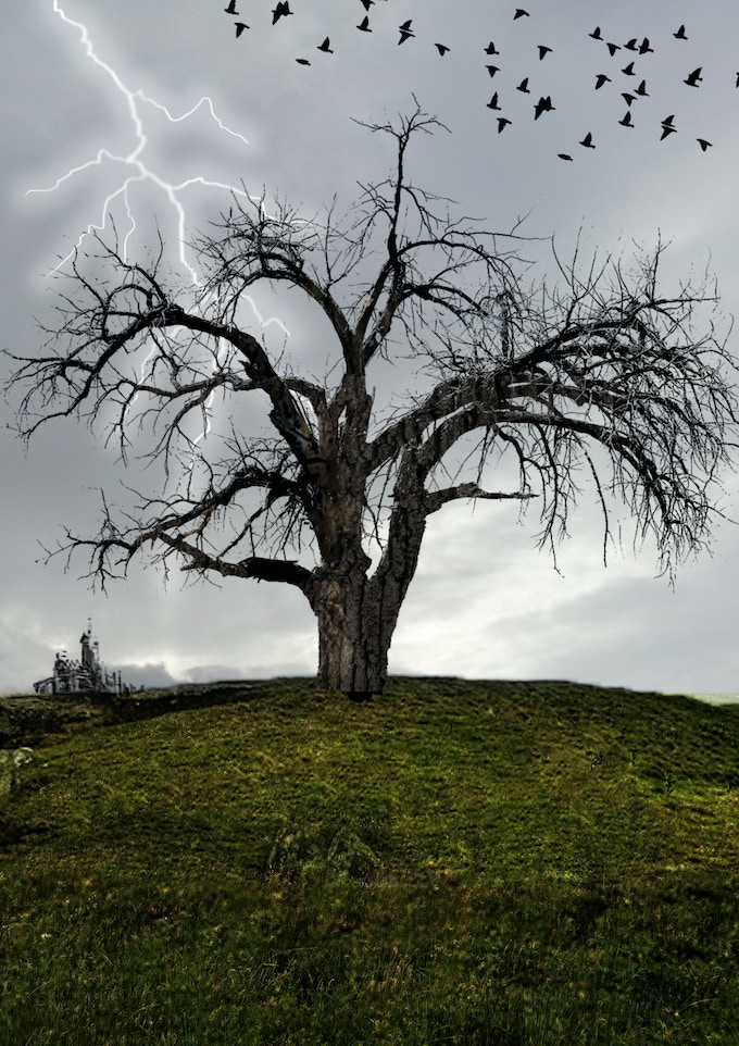The Burnt Tree is best visited in the daylight