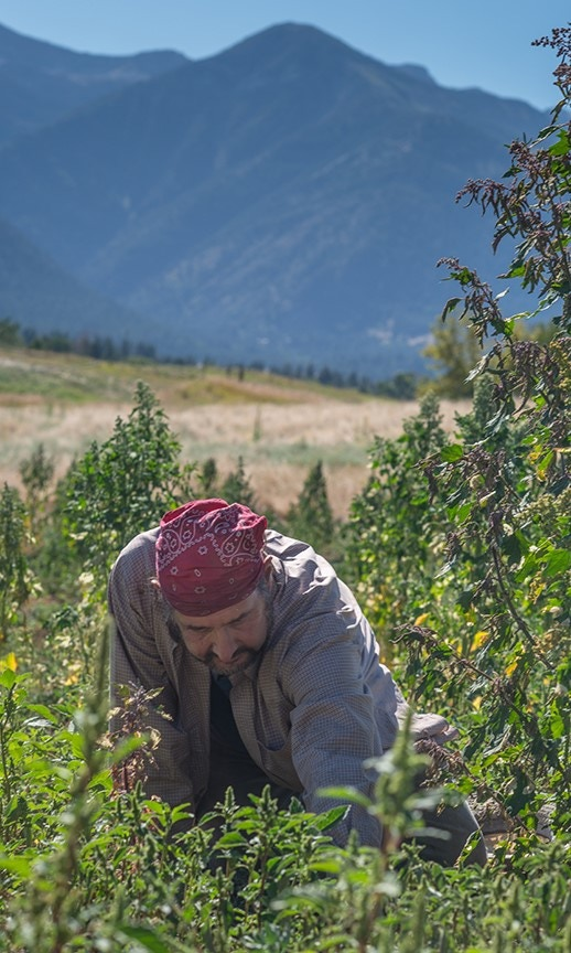 most of the quinoa work is done by hand