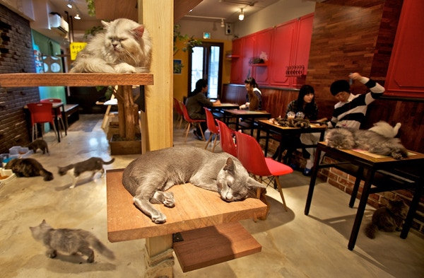 Cat Cafe Melbourne: Australia's First Cat Cafe