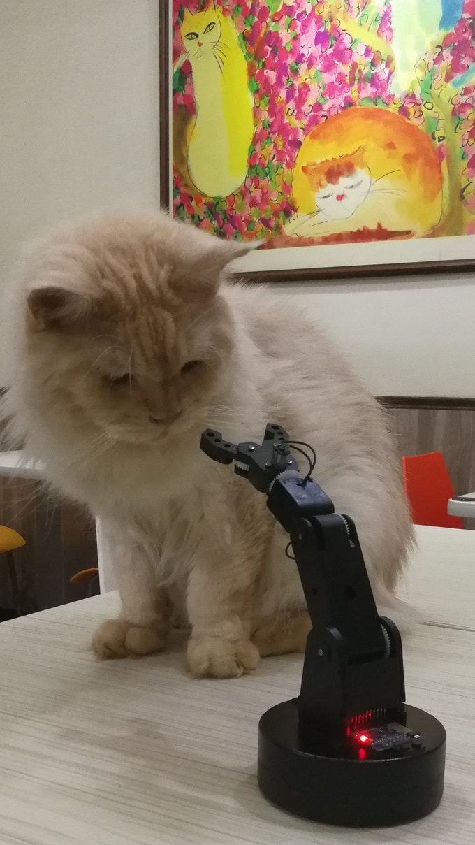 Cat: Here's something interesting.