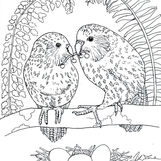 Endangered Kakapo couple- the world's only flightless parrot