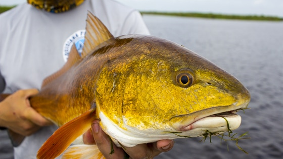 Sight Fishing Mastery School - Catch Redfish Like the Pros