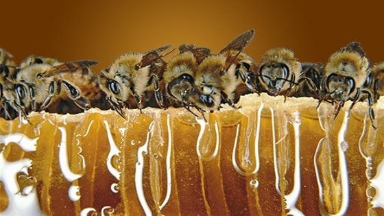 Qeen Bee Honey Farm, Save The North American Bee's