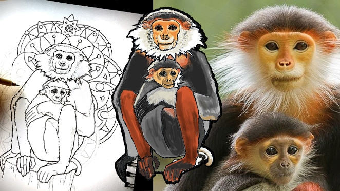 The critically endangered Red Shanked Douc Langur from Vietnam