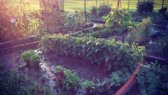 Homestead Village Garden Tractor Fund