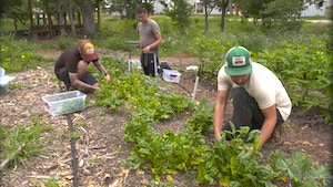 Residents and staff work in the Community Gardens.