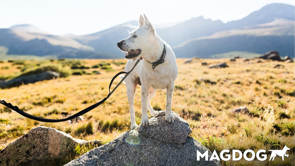 MAGDOG: Magnet Activated Dog Collar, Harness, & Leash System project video thumbnail