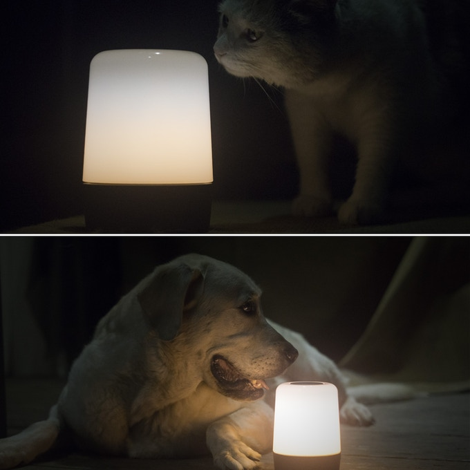A night lamp for your pets