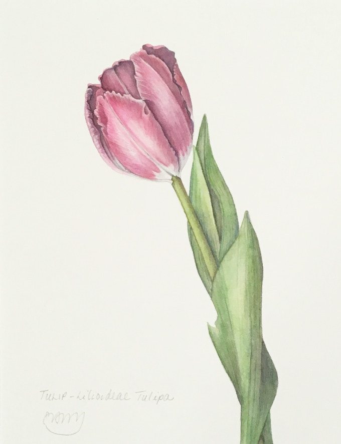 Tulip (NOT AVAILABLE -- CHOSEN BY A BACKER)