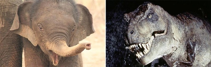 Alas, this is not the actual baby elephant used - but it was only a Baby Elephant - of all the elephants - that trumpeted loud and long, and he (she?) only did it once! From that one recording, Gary Rydstrom built T-Rex's roar.