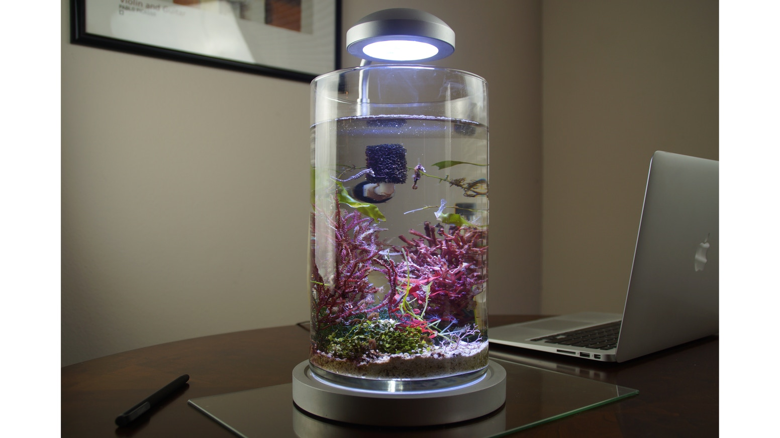 PJ reefs 2.0 is the aquarium that gives the adventurous aquarium hobbyist the ability to own a dwarf seahorse because it introduces new gadgets for their care.