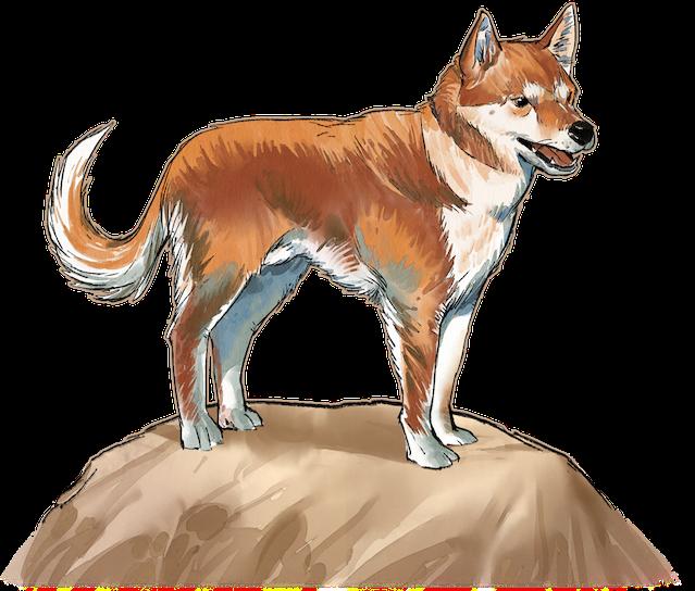 Bau, the familiar dog. (SUCH A GOOD BOY.)
