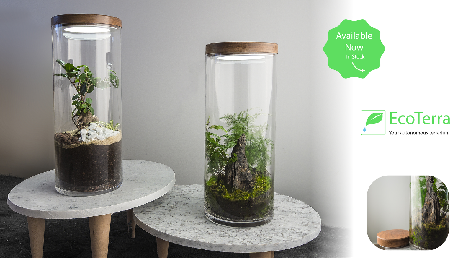 A ZERO maintenance way to bring a piece of nature into your home !