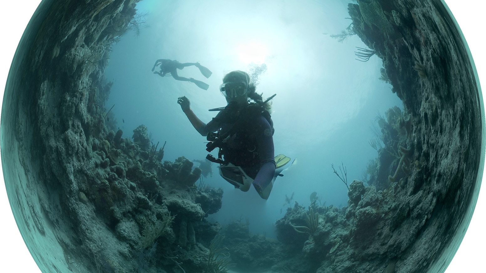 An Immersive Experience With Changing Coral Reefs (360 Video)