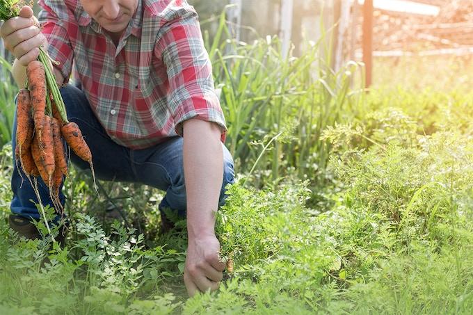 Organic lokal farmer