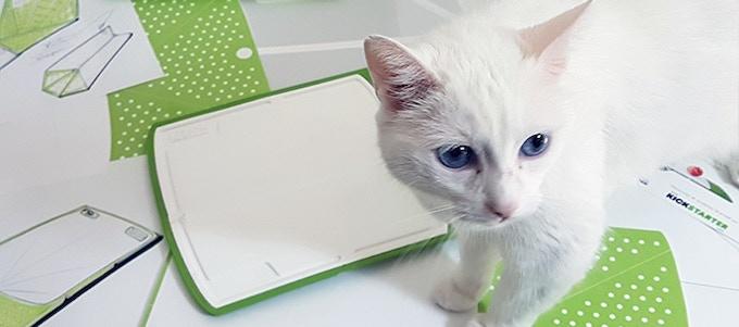 Suzie working very hard on the desk