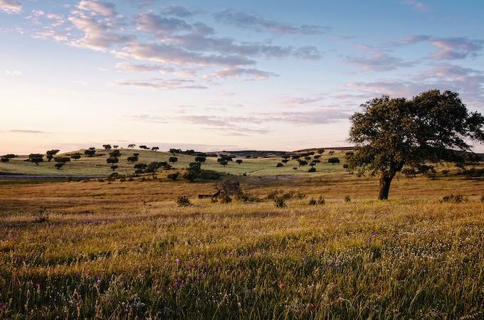 Typical landscape from Alentejo (photo by Carolina Lima)