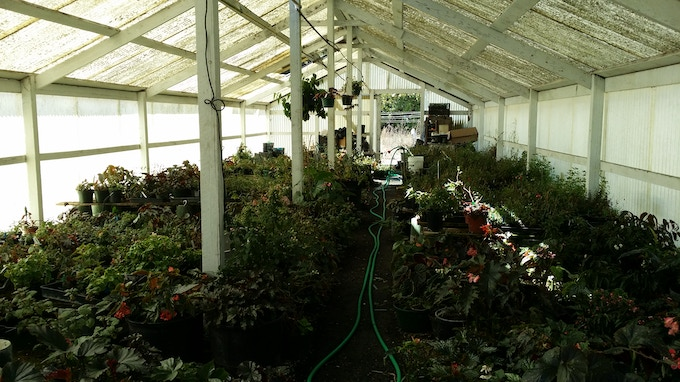 Inside the greenhouse before the retirement sale started.