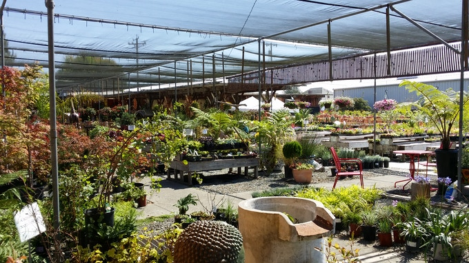 Another view of Alladin's Nursery.  Gustavo Beyer is the owner.