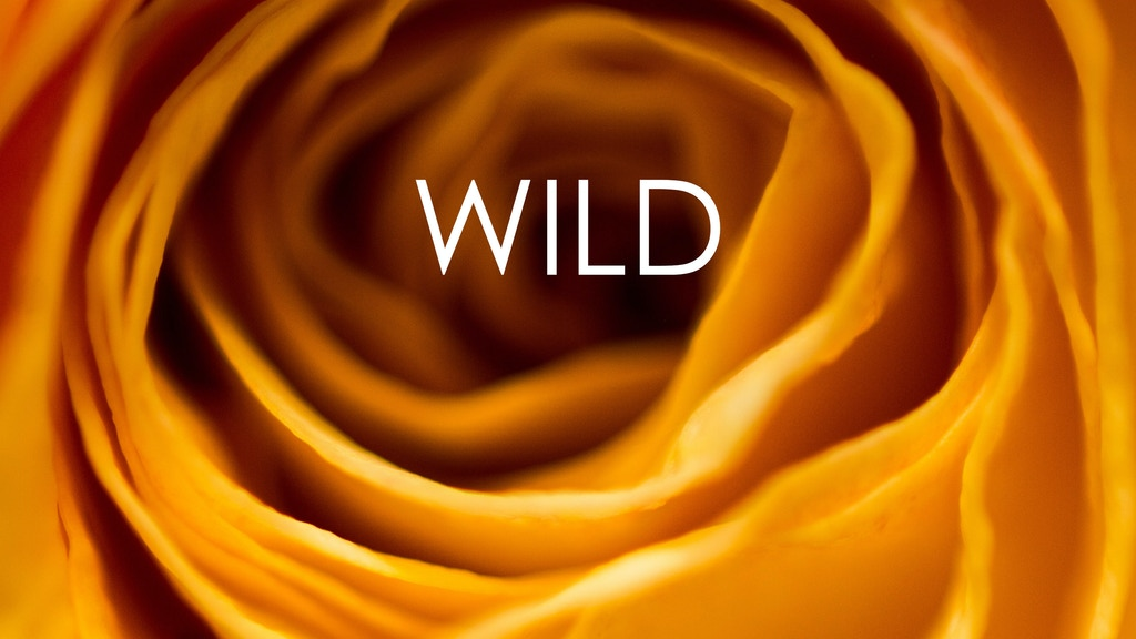 WILD - A close-up photo book of nature's wildest flowers project video thumbnail