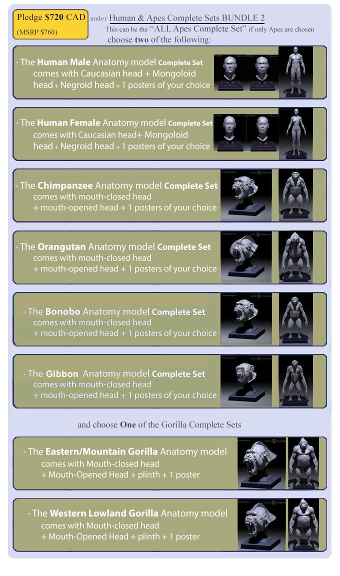 Jun\'s Anatomy: Human & Great Apes anatomy models by Jun Huang ...