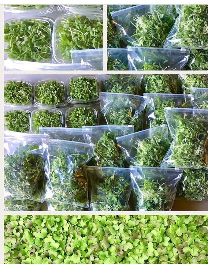 Micro Greens to Restaurants
