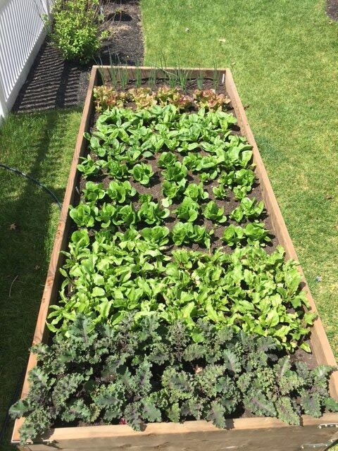 Home Built Veggie Bed by Horne Family Farms