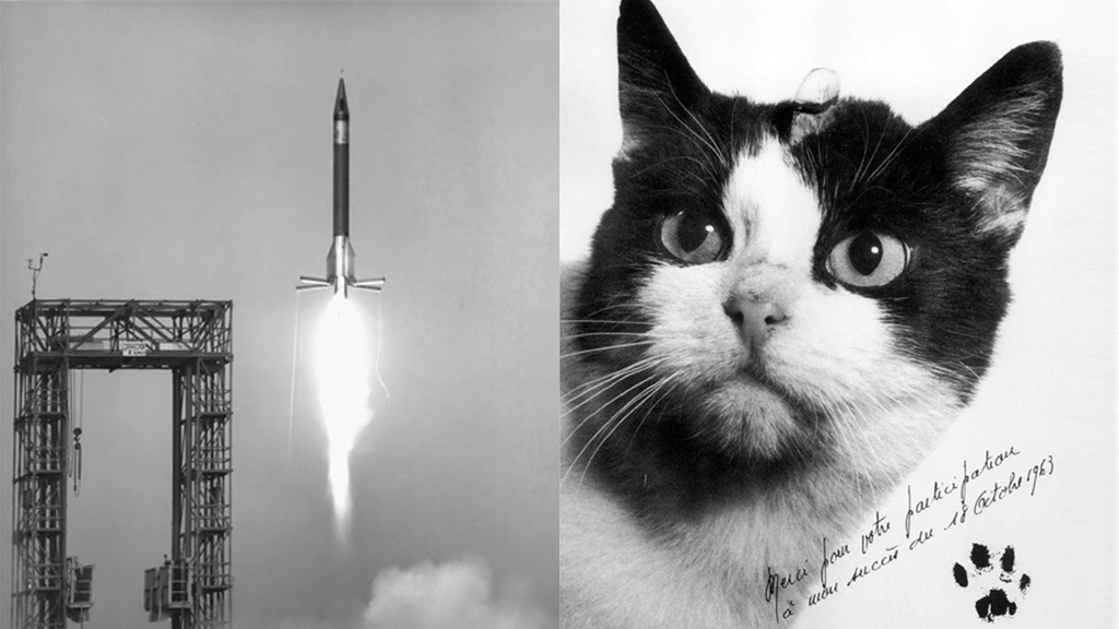 A statue to Félicette, the first cat in space. project video thumbnail