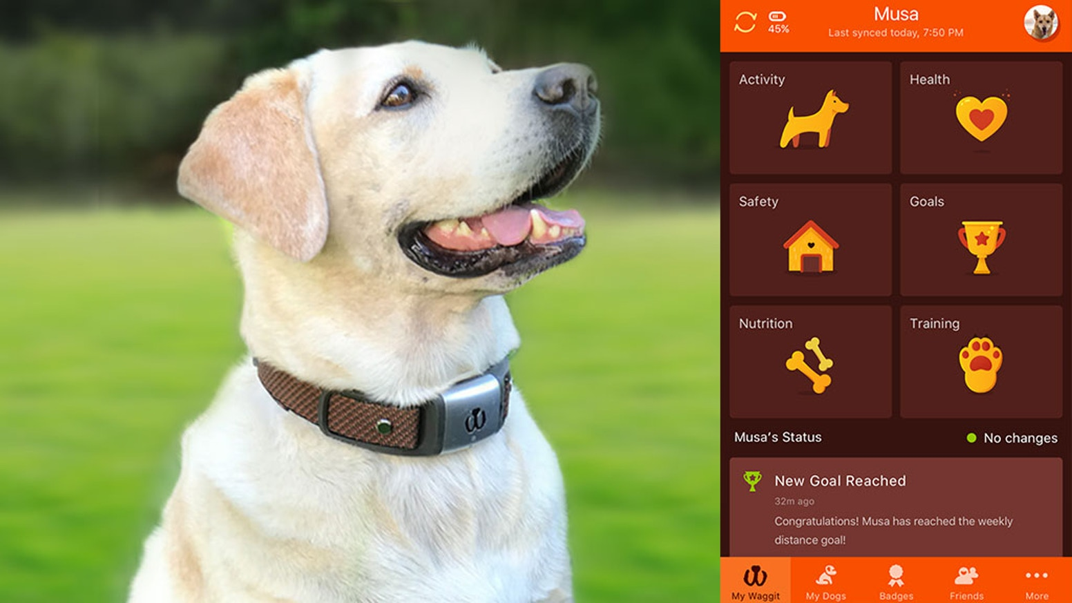 Waggit takes the wrist wear of the human health care world and brings it into your dog's collar.