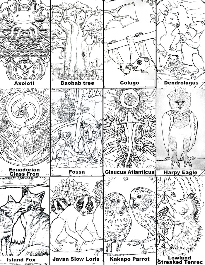 Last Chance Earth: Endangered Species Coloring Book by