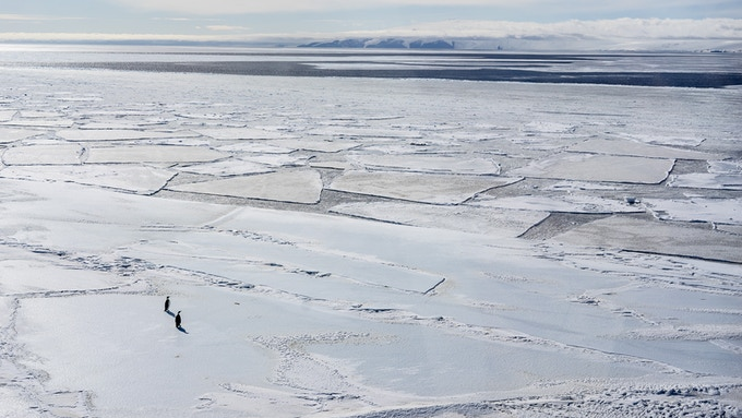 Emperor Penguins on McMurdo Sound