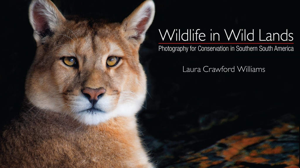 Wildlife in Wild Lands: Photography for Conservation project video thumbnail